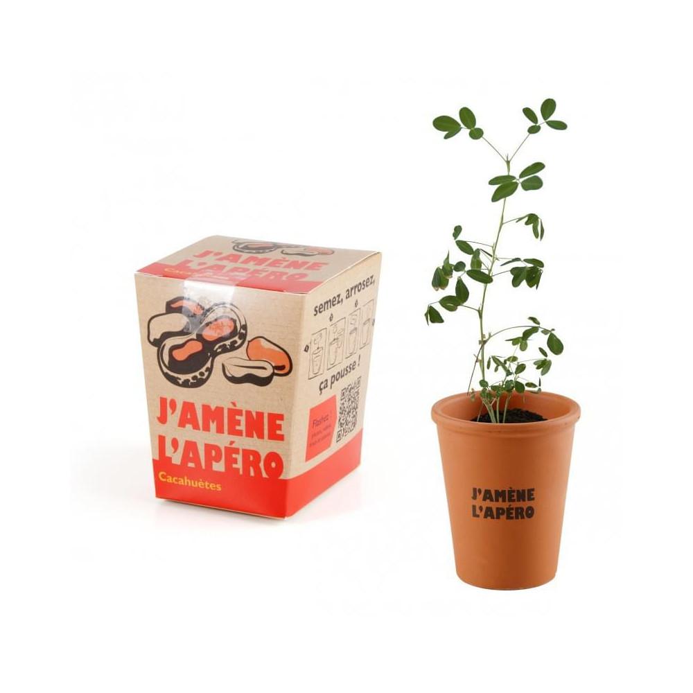 plante cacahouète à faire pousser apéro